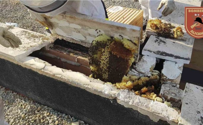 <span style='color:#780948'>ARCHIVED</span> - Firefighters called to remove 90,000 bees from high school in Alicante