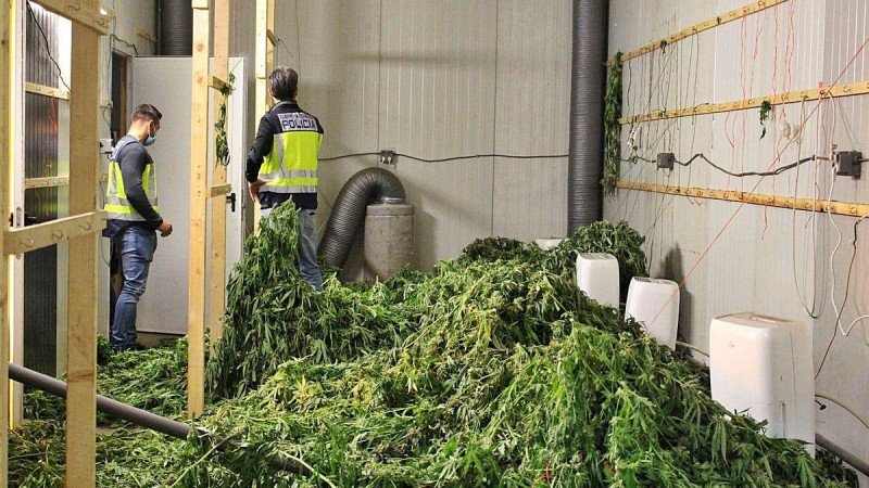 <span style='color:#780948'>ARCHIVED</span> - 900 kilos of marihuana found in Valencia packed and ready for transport to the Netherlands