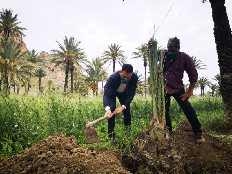 <span style='color:#780948'>ARCHIVED</span> - Orihuela digs deep for Tree for Europe initiative