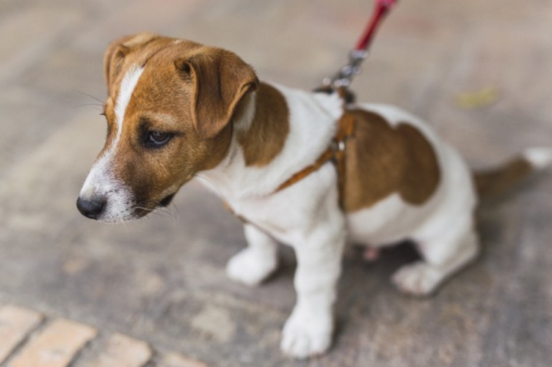 <span style='color:#780948'>ARCHIVED</span> - Volunteer dog walkers sought by Benissa, Alicante animal sanctuary