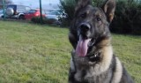 Torrevieja drug dealer to pay vet charges after dogs bit his hashish